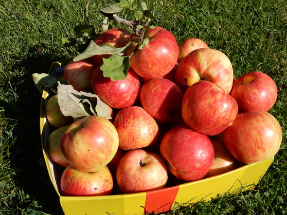 Five lessons from an apple picker